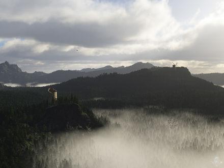 Обои Туман в лесу