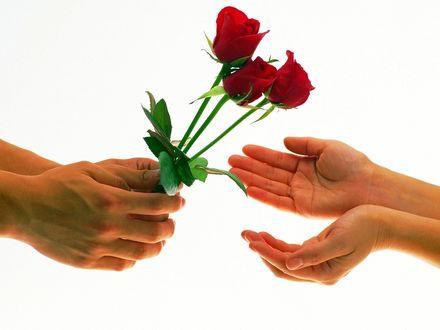 Обои Парень дарит девушки 3 розы