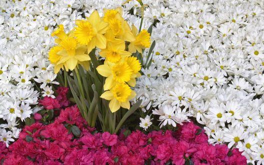 Обои Ковёр цветов только для тебя