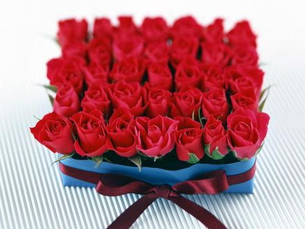 Обои Розы в подарок на 8 марта