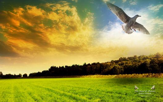 Обои Поле.. и по-настоящему свободные существа - птицы... (The Land of Andraes, Andrea Andrade))