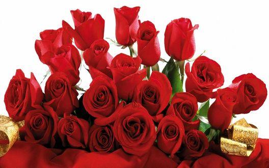 Обои Букет роз с золотой лентой