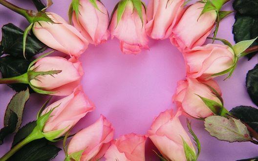 Обои Тюльпаны ,выложенные в виде сердца