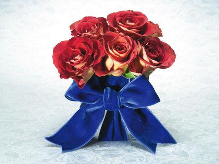 Обои Пять роз перевязаны синим бантом