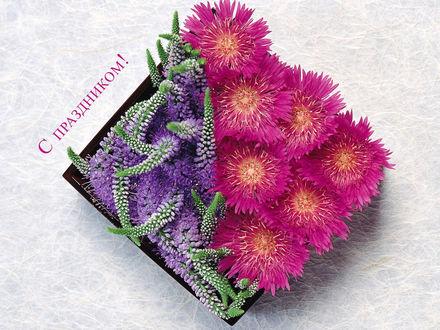 Обои Цветы в квадратной коробочке (с праздником!)