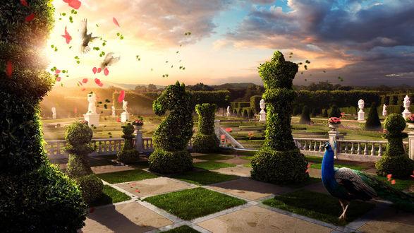 Обои Рассвет в зазеркалье... павлин гуляет по саду, который выполнен в виде шахматной доски