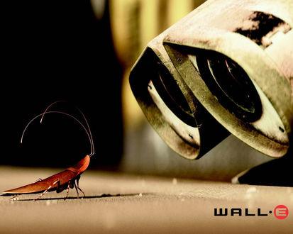 Обои Wall-E и таракан