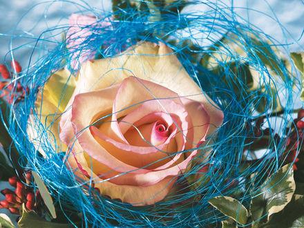 Обои Роза в цветной соломке