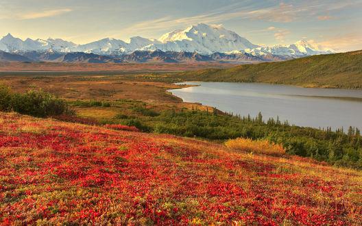 Обои Прекрасный пейзаж... снежные вержины гор, широкая река и поле с красными цветочками