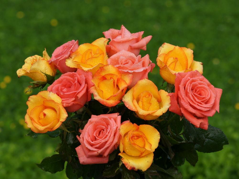 Обои для рабочего стола Букет из роз
