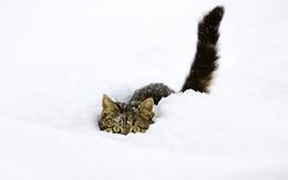 Уши и глаза животные зима смешные