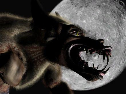 Обои Волк-оборотень...