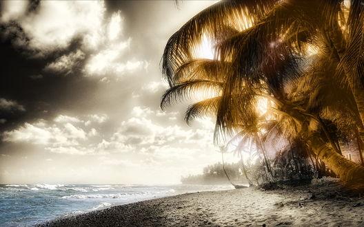 Обои Пальмы и океан