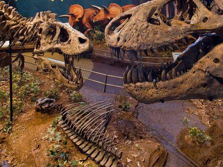Обои Палеонтологический музей.Скелеты и чучела  динозавров