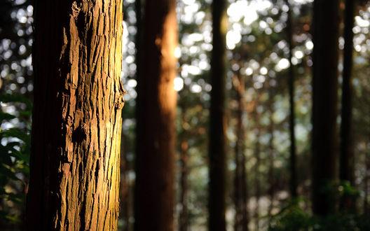 Обои Ствол старого видавшего виды дерева под солнышком