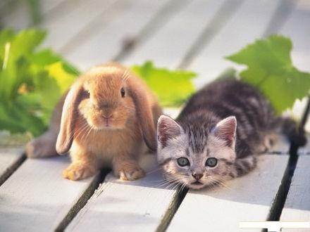 Обои Зайчик и котёнок - лучшие друзья