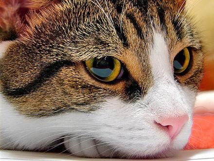 Обои Кот-мыслитель