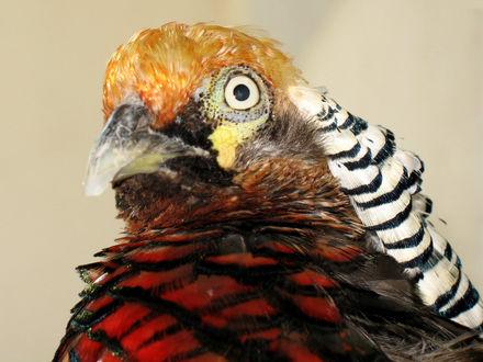 Обои Очень красивый попугай