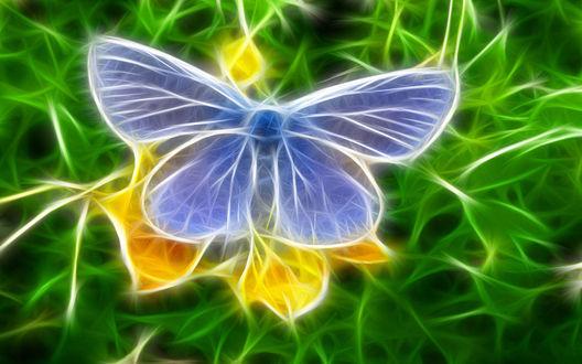 Обои 3d бабочка