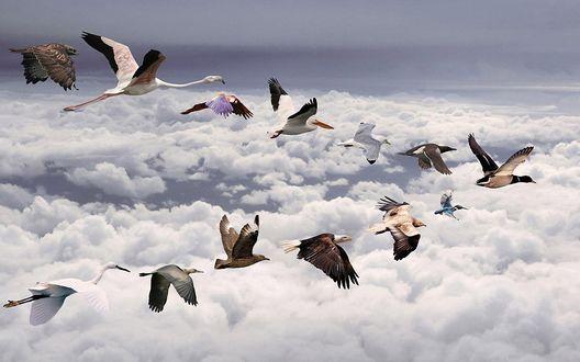 Обои Перелёт птиц разных видов
