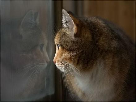 Обои Киса смотрит в окно