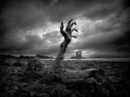 Обои Коряга причудливой формы в виде вытянутой из земли руки