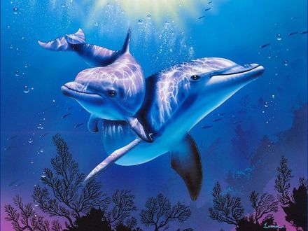 Обои Пара дельфинов резвящихся в воде