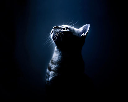 Обои Котик при луном свете