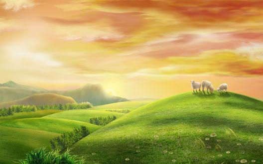 Обои Овечки на травяном холме