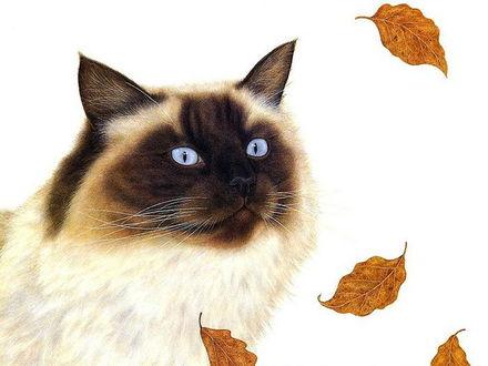 Обои Сиамский кот и падающие листья