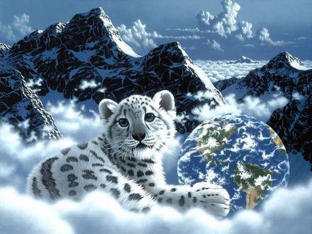 Обои Маленький снежный барс, лёжа в облаках, обнимает игрушку, шар с очертаниями Землм