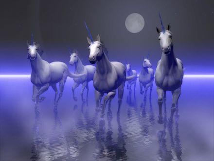 Обои Табун единорогов несётся по водной глади в лунную ночь