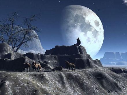 Обои Лунная ночь. Стая волков расположилась на каменном выступе