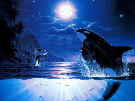 Обои Касатки резвятся в лунную ночь