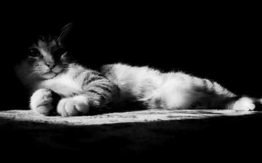 Обои Кошка на ковре в световом пятне