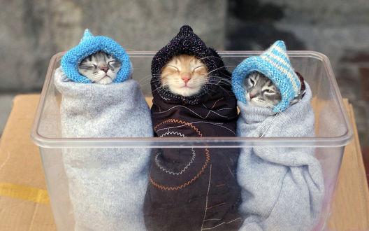 Обои Котят укутали как в вязанную одежду и продают в пластиковой емкости