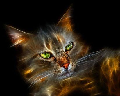 Обои Очень красивый нарисованный кот