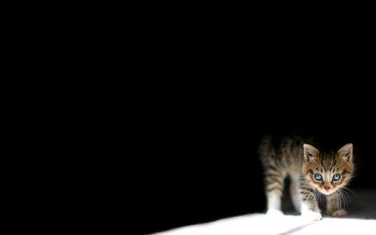 Обои Маленький котенок выходит из тени на свет