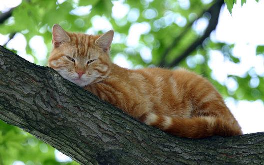 Обои Кошка на дереве