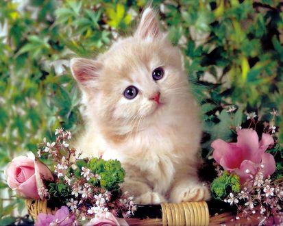 Обои Котёнок в цветах