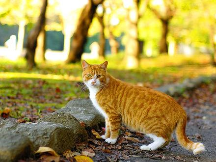 Обои Рыжий кот гуляет по парку