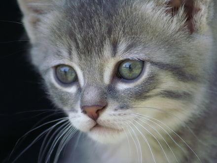 Обои Маленький котик с грустными глазами