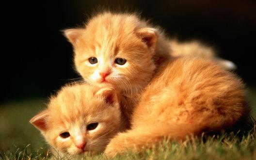 Обои Милые котята греются на солнце