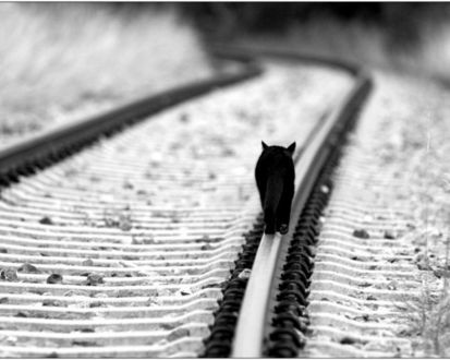 Обои Черная кошка идет по железной дороге