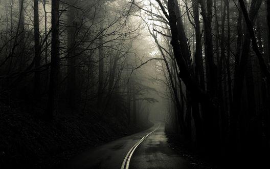 Обои Страшная дорога уводит в тайны тёмного леса