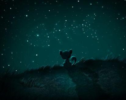Обои Маленький котёнок сидит и смотрит на красивое звёздное небо