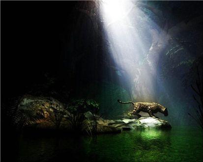Обои Леопард пришёл на водопой с первыми лучами солнца
