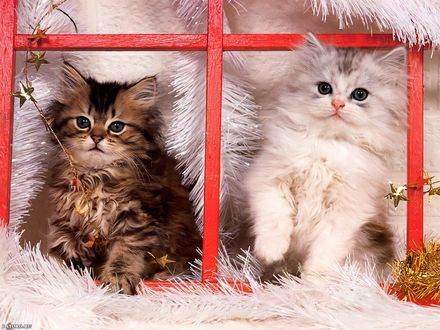 Обои Котята на Новый Год