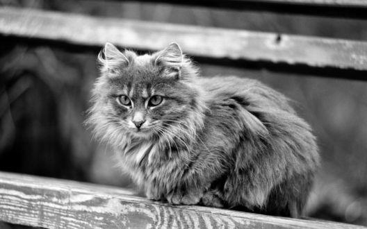 Обои Серый котёнок