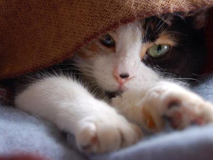Обои Котёнок спрятался